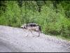 1145_wolvescouple