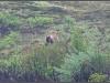 1171_grizzlyuphill