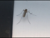 0849_mosquito
